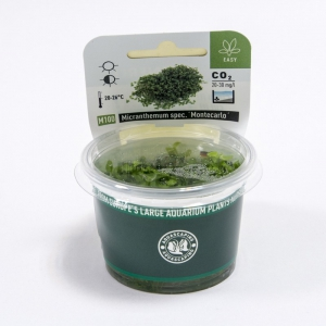 micranthemum-monte-carlo-in-vitro-dennerle-plant-it